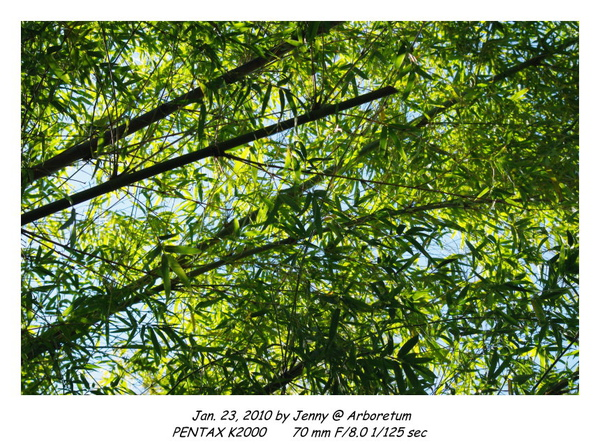 IMGP8837 frame.jpg