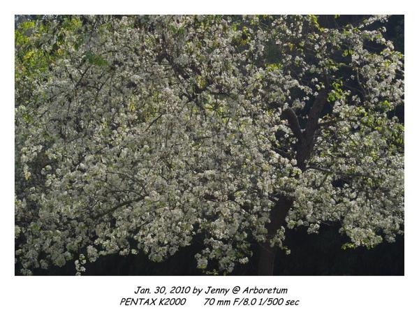 IMGP9009 frame.jpg