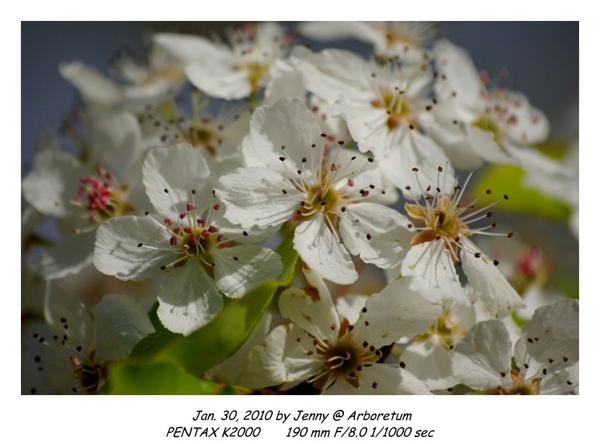 IMGP9015 frame.jpg