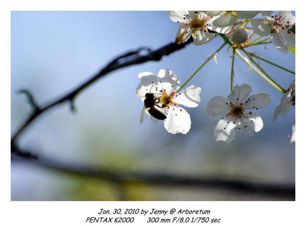 IMGP9017 frame.jpg