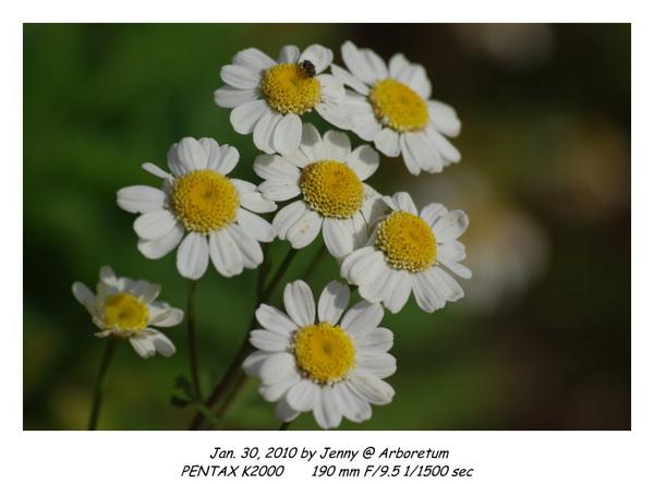 IMGP9051 frame.jpg