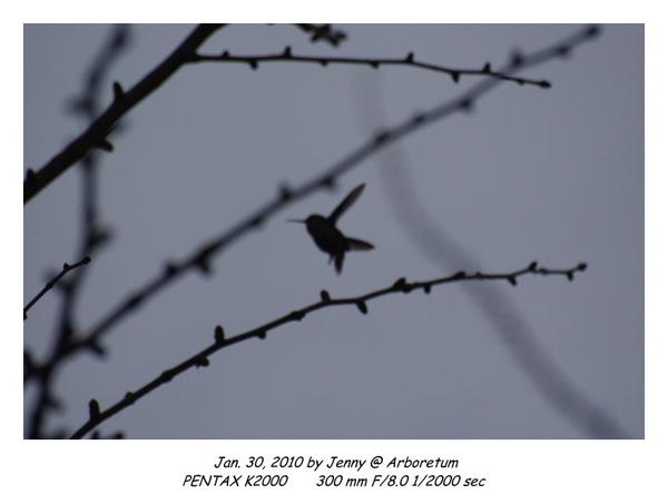 IMGP9055 frame.jpg