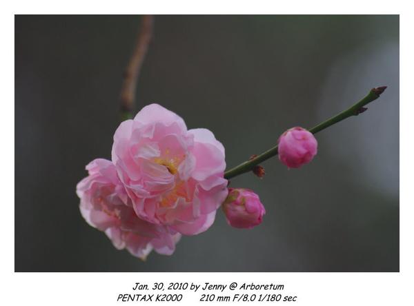IMGP9066 frame.jpg