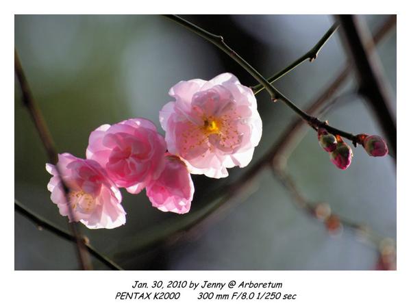 IMGP9071 frame.jpg