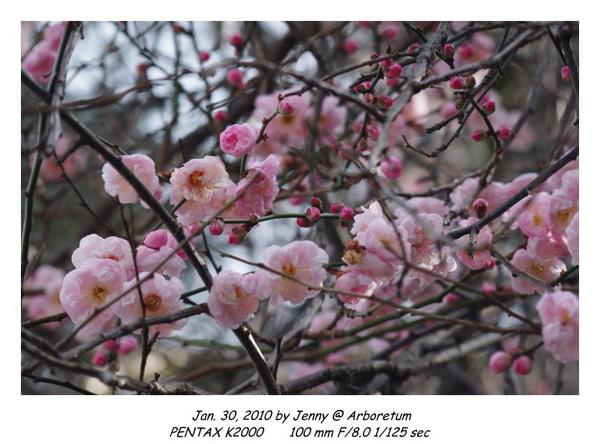 IMGP9074 frame.jpg