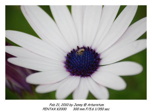 IMGP9316 frame.jpg