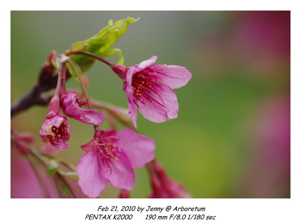 IMGP9352 frame.jpg