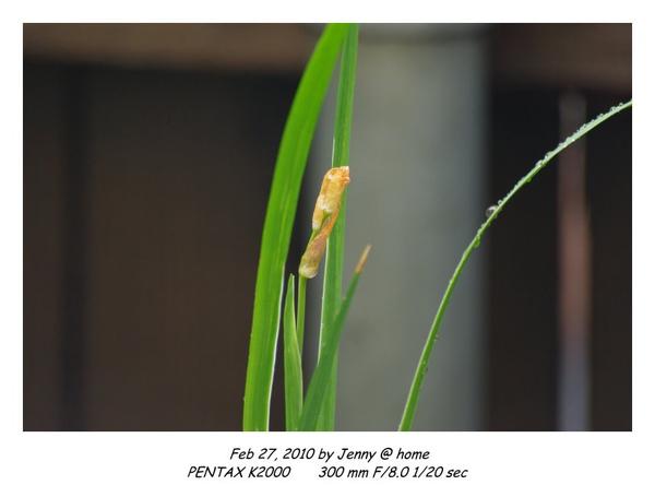 IMGP9502 frame.jpg