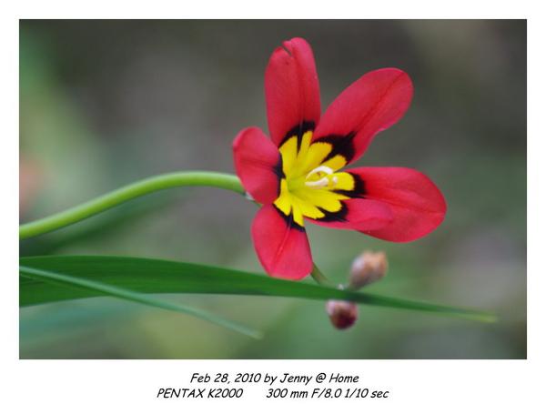 IMGP9576 frame.jpg