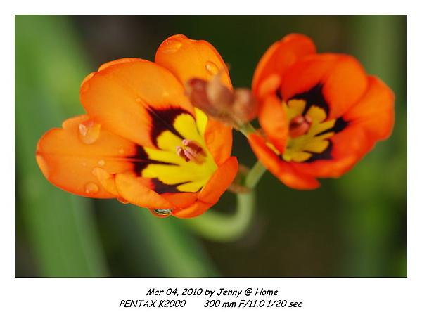 IMGP9590 frame.jpg