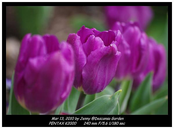 IMGP0153 frame.jpg