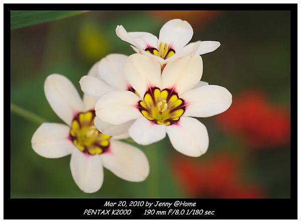IMGP0211 frame.jpg