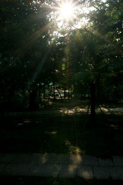 樹林中的日影