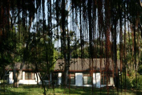 老樹/舊屋