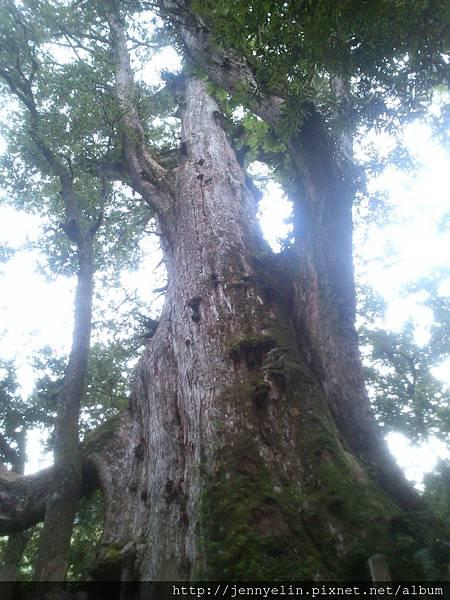 13'0730 新竹-司馬庫斯-巨木群