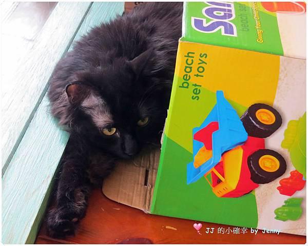 這裡有貓34.JPG
