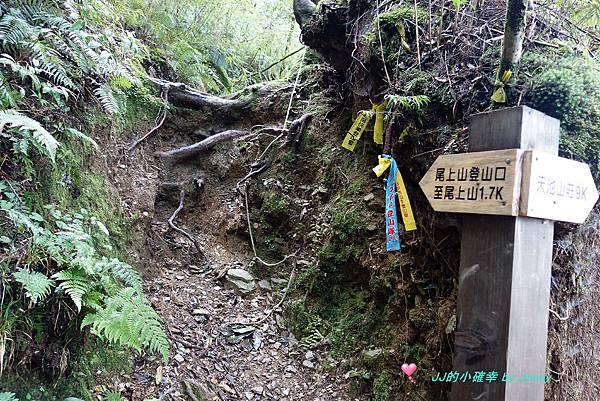 奇萊南峰南華15.JPG