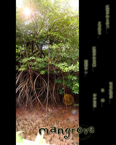 帛國生態之紅樹林