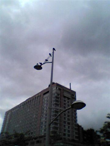 天線一排鴿子在沸騰