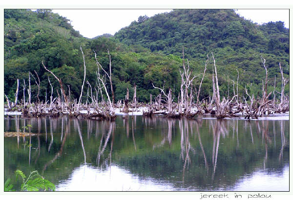 grave-of-mangrove-005