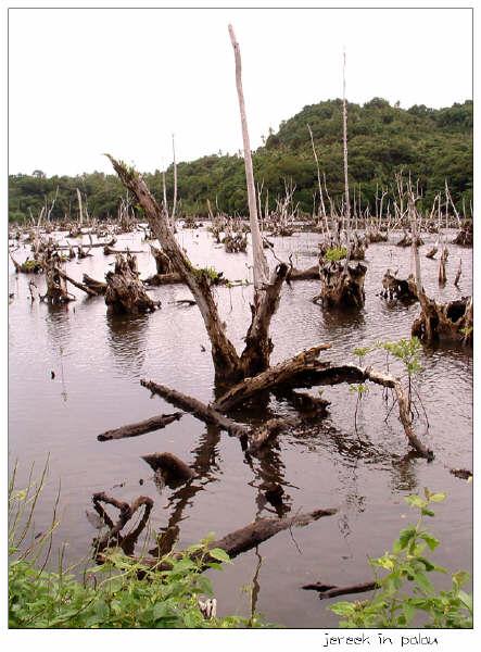 grave-of-mangrove-007