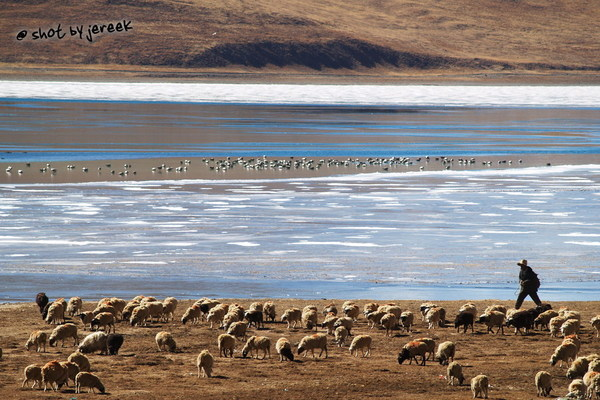 聖湖旁牧羊人