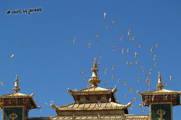 桑耶寺的飛鳥,,大多是鴿子