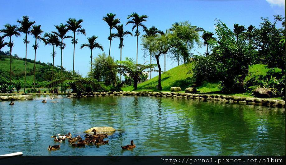 池塘.JPG