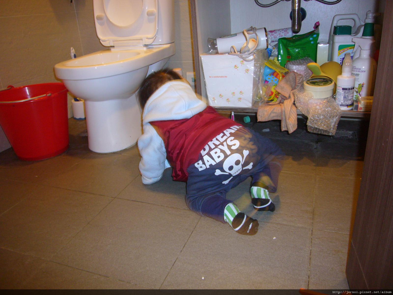 最愛爬到廁所