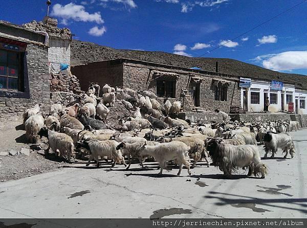 20150918-3羊群 (4).jpg