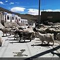 20150918-3羊群 (3).jpg