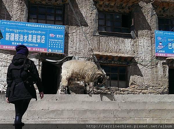 20150918-4羊+狗 (2).jpg