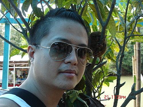 菲律賓 眼鏡猴