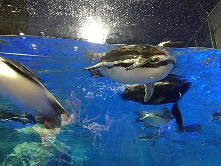 企鵝5.jpg