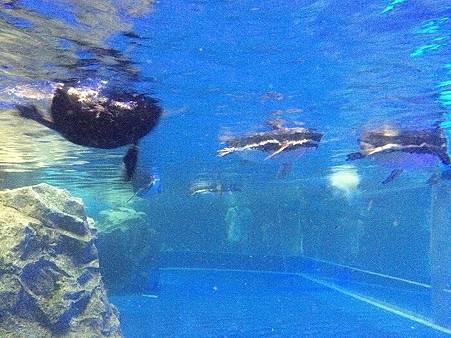 企鵝6.jpg