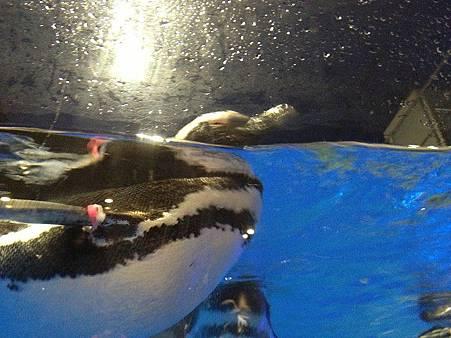 企鵝7.jpg