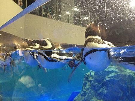 企鵝8.jpg