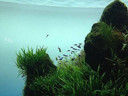小魚3.jpg