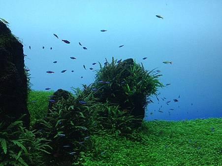 小魚4.jpg