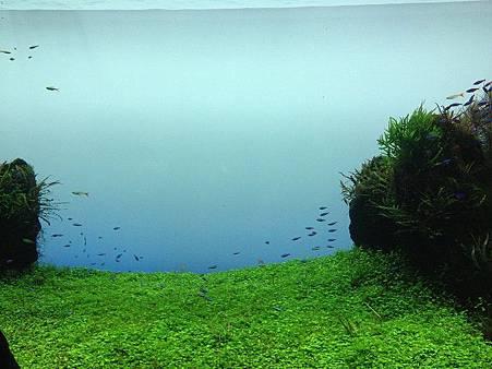 小魚5.jpg