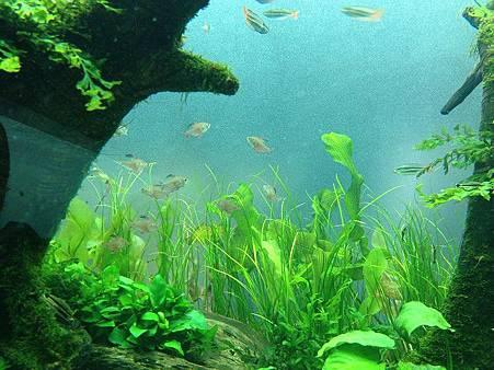 小魚7.jpg