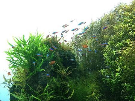小魚6.jpg