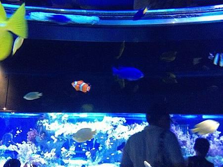 色魚2.jpg
