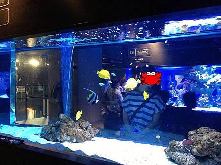 色魚3.jpg