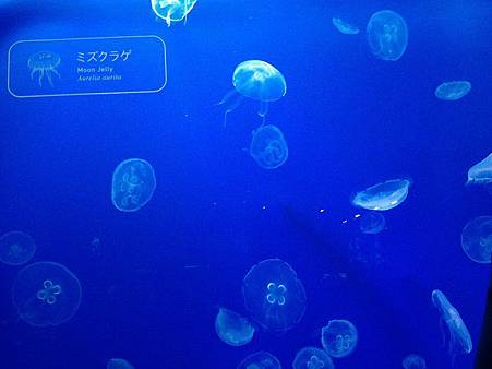 水母1.jpg