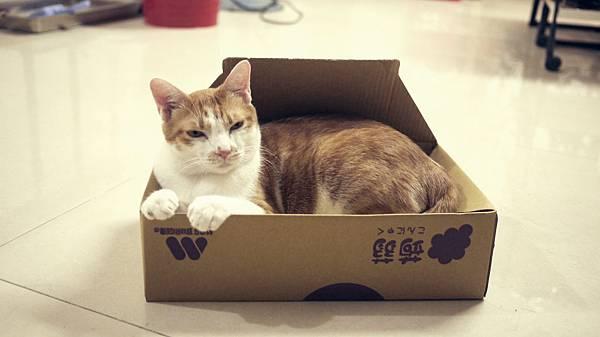 明明紙箱很小,身體很大。