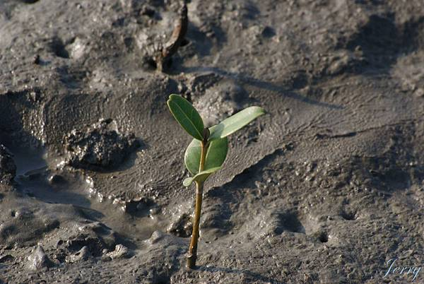 香山濕地_植物3.JPG
