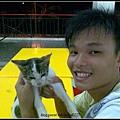 锡文&可怜的猫猫