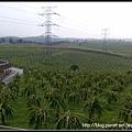 龙珠果园3.jpg