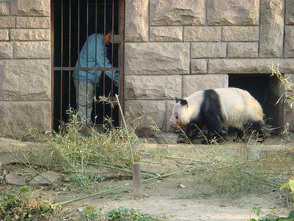 熊4.JPG